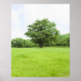 Cielo azul y campo de la hierba póster