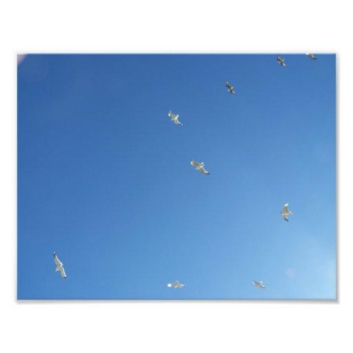 Cielo azul y gaviotas minimalistas fotografías