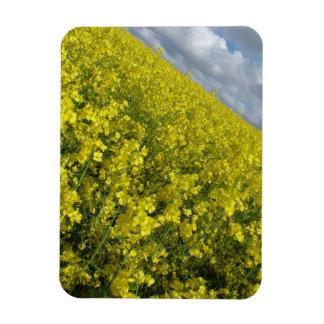 Cielo azul y nublado del agaisnt amarillo de la iman flexible