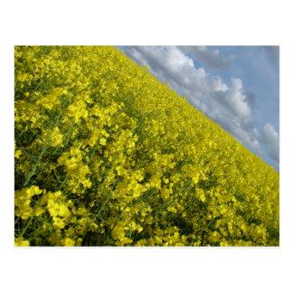 Cielo azul y nublado del agaisnt amarillo de la postales