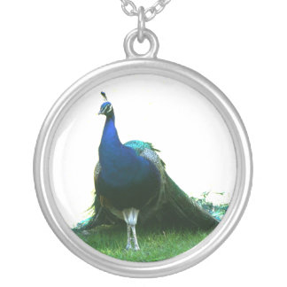 Cielo claro de la hierba azul del pavo real apenas pendiente personalizado
