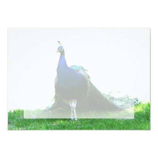 Cielo claro de la hierba azul del pavo real apenas invitaciones personales
