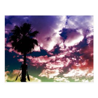 Cielo colorido de la palma postales