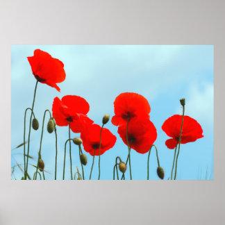Cielo de flores de amapola poster