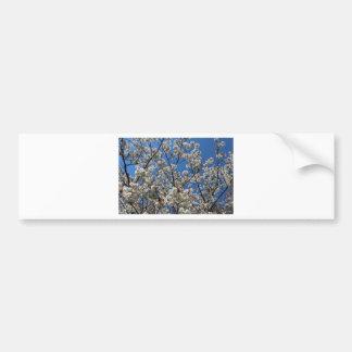 Cielo de la flor de cerezo etiqueta de parachoque