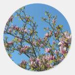 Cielo de la magnolia pegatinas redondas