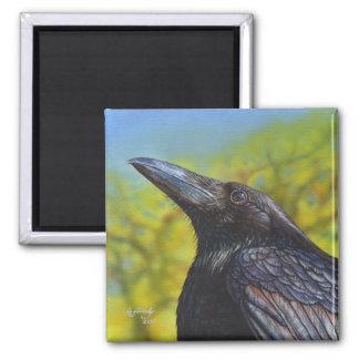 Cielo de la primavera del cuervo imán cuadrado