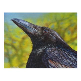 Cielo de la primavera del cuervo postal