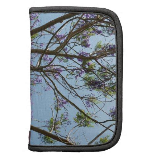 cielo de las flores de las ramas de árbol del jaca organizador