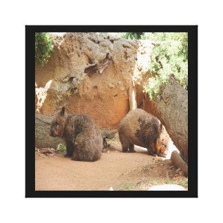 Cielo de Wombat Lona Envuelta Para Galerías