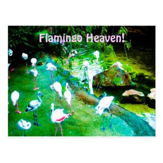 Cielo del flamenco postales