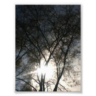 Cielo entre los árboles fotografías