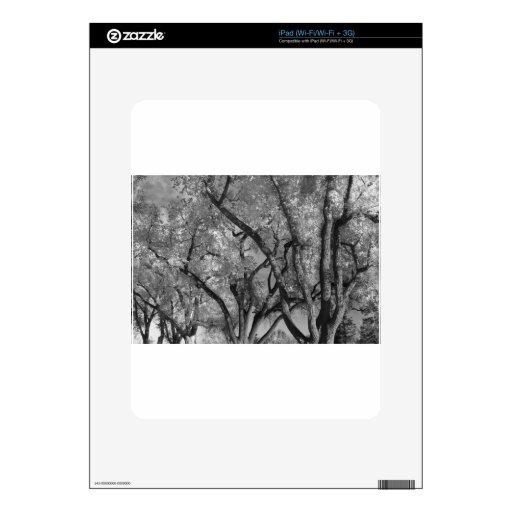 Cielo loco del árbol skins para iPad