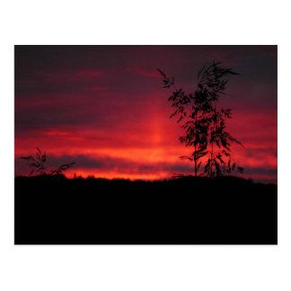Cielo rojo 18a de agosto tarjeta postal