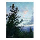 Cielo y árboles tarjetas postales