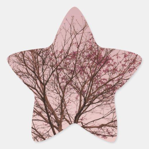 Cielo y fotografía rosados del árbol pegatina en forma de estrella