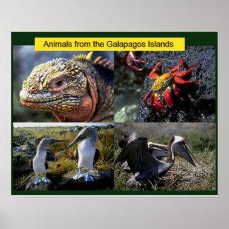 Ciencia, animales de las Islas Galápagos Póster
