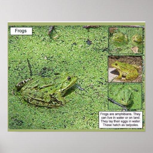 Ciencia, ciencias de la vida, ranas impresiones