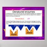 Ciencia, digestión, enzimas desnaturalizadas poster