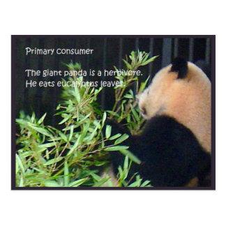 Ciencia, fuentes de la comida, consumidores primar postales