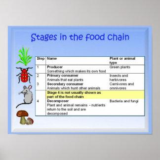 Ciencia, nutrición, etapas en la cadena alimentari póster