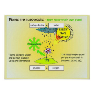 Ciencia plantas autógrafos comida posters