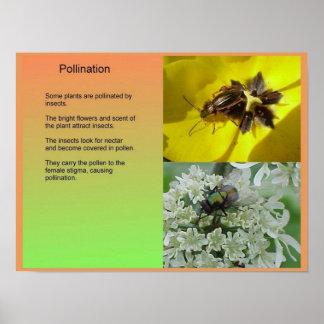 Ciencia, plantas, reproducción, polinización póster