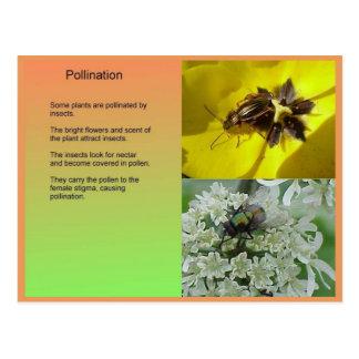 Ciencia, plantas, reproducción, polinización tarjetas postales