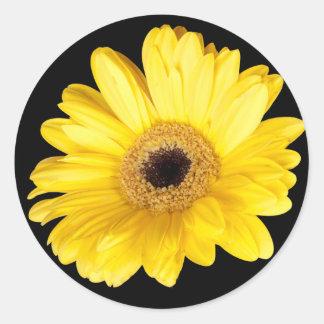 Cierre amarillo de la margarita de Gerber encima Pegatina Redonda