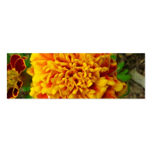 Cierre amarillo de oro de la maravilla para arriba tarjetas de visita mini