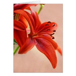Cierre anaranjado del lirio tigrado encima de la tarjeta de felicitación