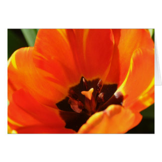 Cierre anaranjado del tulipán para arriba tarjeta de felicitación