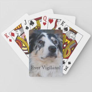 Cierre australiano de la mezcla del pastor encima  baraja de póquer