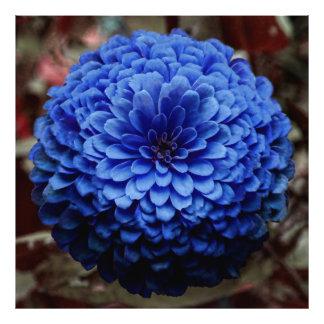 Cierre azul de la flor encima de la foto