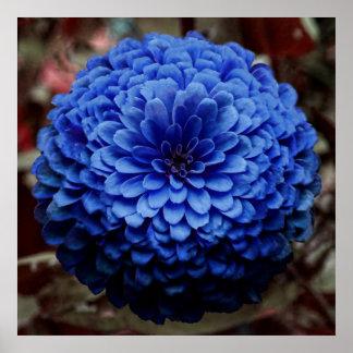 Cierre azul de la flor encima de la foto póster