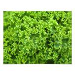 Cierre botánico para arriba - el verde se va (la fotografía