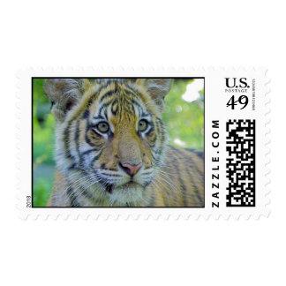 Cierre de Cub de tigre encima del retrato Estampillas