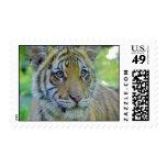 Cierre de Cub de tigre encima del retrato Franqueo