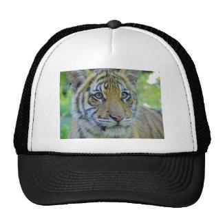 Cierre de Cub de tigre encima del retrato Gorra