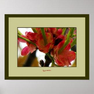 Cierre de la base de los flores del arándano encim poster
