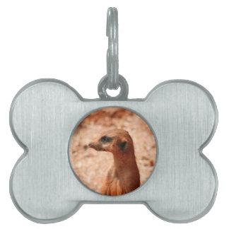 cierre de la cabeza del meerkat encima de la placas mascota