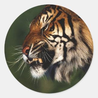Cierre de la cabeza del tigre para arriba etiqueta