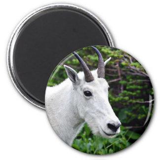 Cierre de la cabra de montaña para arriba imán redondo 5 cm
