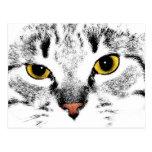 Cierre de la cara del gato para arriba postales