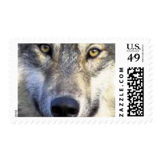 Cierre de la cara del lobo para arriba sellos