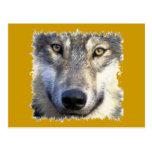 Cierre de la cara del lobo para arriba tarjetas postales