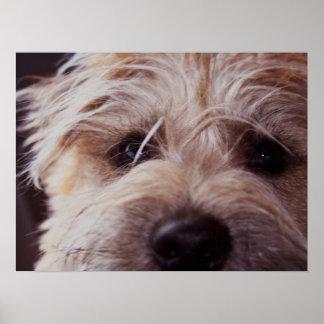 Cierre de la cara del perrito encima del poster