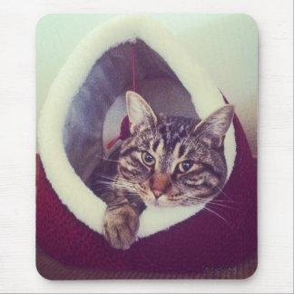 Cierre de la choza del gatito encima de la foto alfombrilla de raton