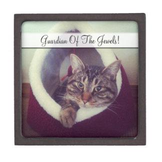 Cierre de la choza del gatito encima de la foto caja de regalo de calidad