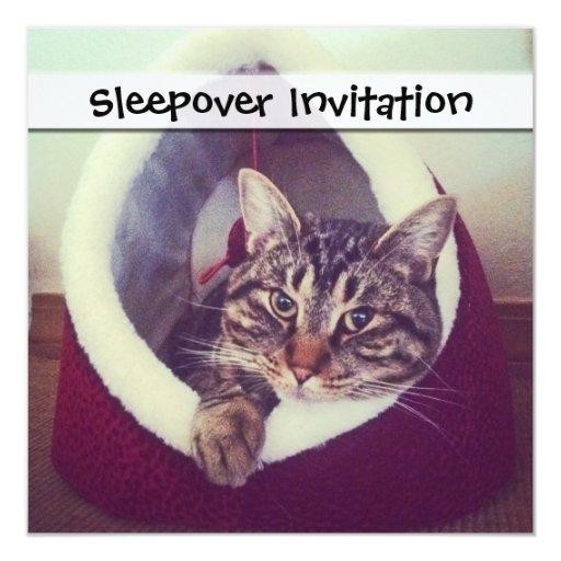 Cierre de la choza del gatito encima de la comunicados personalizados